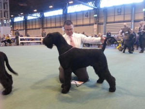Massive--Best Puppy Crufts