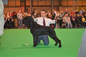 massive RDCC Crufts