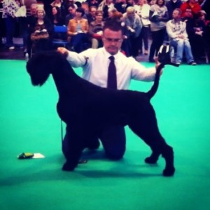 Massive-Best Puppy Crufts