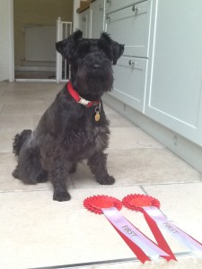 Yesterday she made us very proud when she won two first prizes at our local agricultural show (Askwith, North Yorkshire). Nearly 50 dogs were registered on the day and she won 'pedigree non sporting' category and 'Dog the judge would like to take home'
