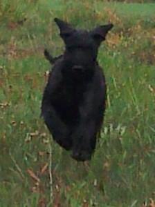 Tor happy dog!!