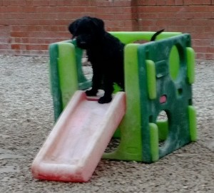 I'm the King of the Castle!!!!