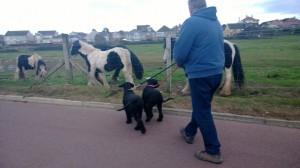 Ike+Tora meet the Horses