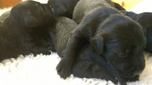 Bricey's pups 2nd March