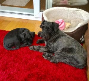 Otis+Tilly
