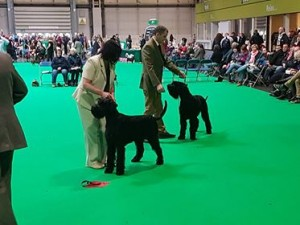 Uncle Boris at Crufts