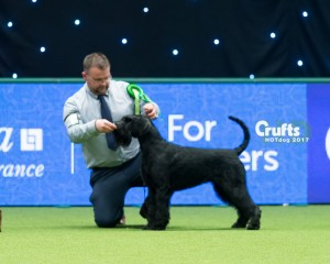 And--the wonderful Purdey(Nadia's sister) winning best Of Breed at Crufts!!!!!
